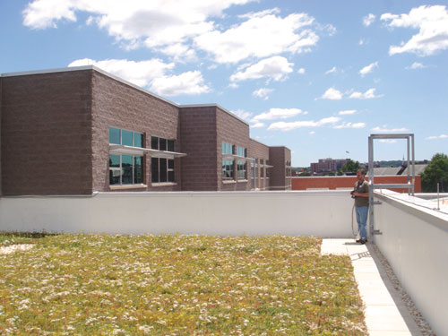 Ferguson's vegetative green roof sits over the media center. <br /> The pre-engineered roofing system, which features sedum, a plant that doesn't grow over six to eight inches, cuts down on storm water drainage and provides more insulation than a typical roof.